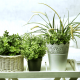 Indoor Plants That Improve Air Quality